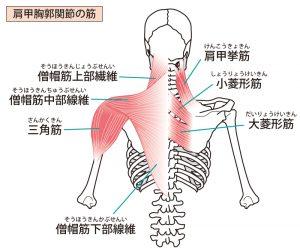 緊張性頭痛に由来する筋肉